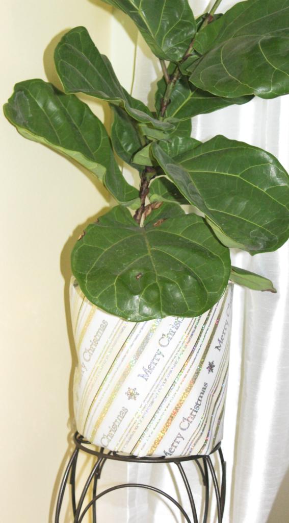simply-seasonal-plant