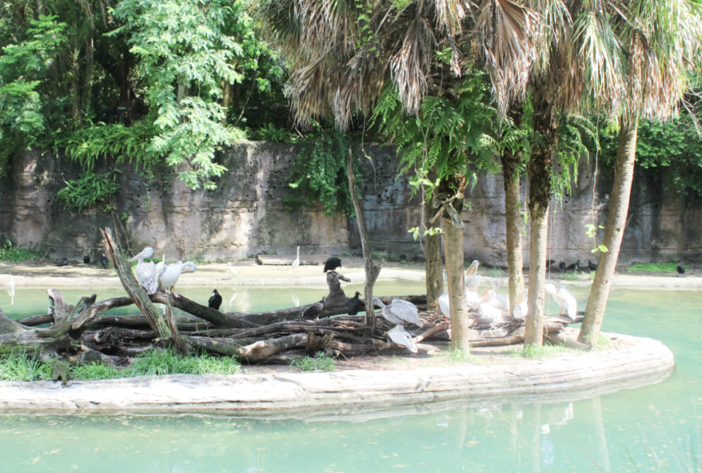 Orlando Vacation - Disney - Animal Kingdom - Birds - At Home With Zan
