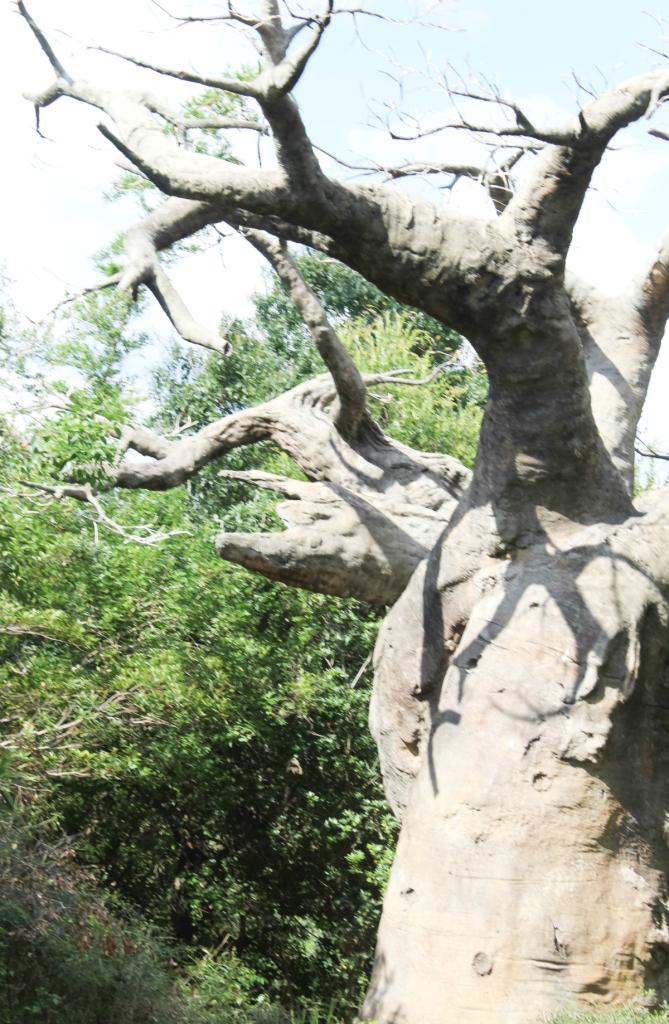 Orlando Vacation - Disney - Animal Kingdom - Upside Down Tree - At Home With Zan