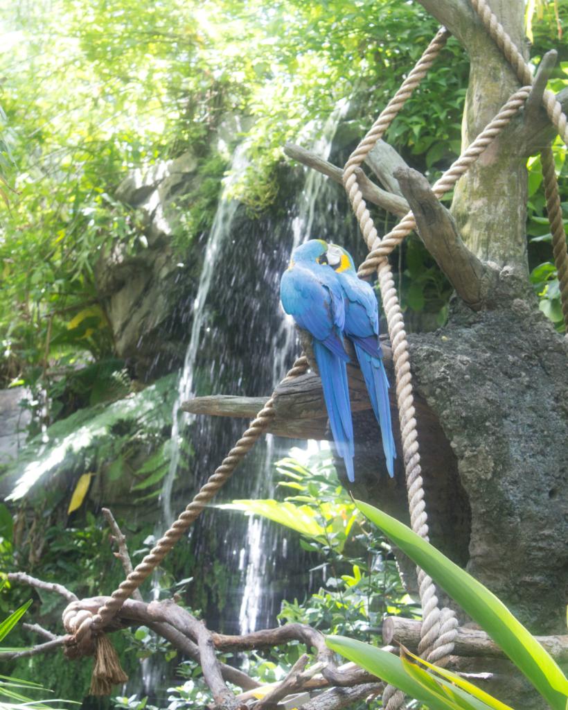 Orlando Vacation - Disney's Animal Kingdom -Parrots - At Home With Zan