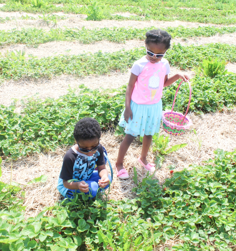 Trip -To the Strawberry Farm - At Home With Zan
