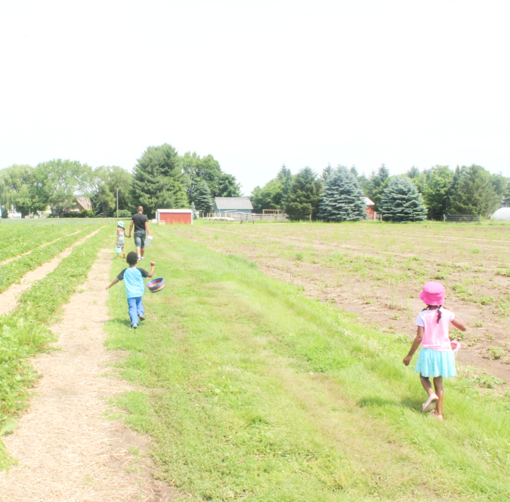 Trip to the Strawberry Patch - Family - Outing - Strawberry Picking With Kids - At Home With Zan-