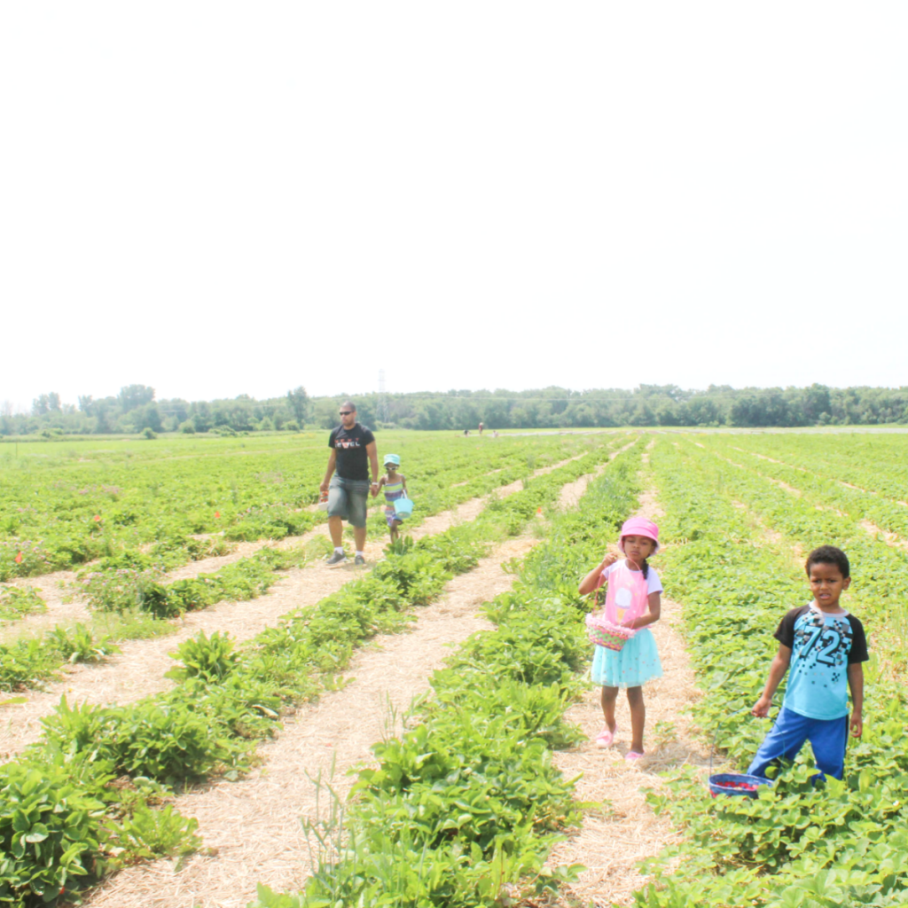 Trip to the Strawberry Patch - Family Outing - Strawberry Picking With Kids - At Home With Zan